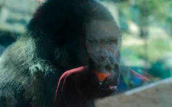 San DIego Zoo 0109_1