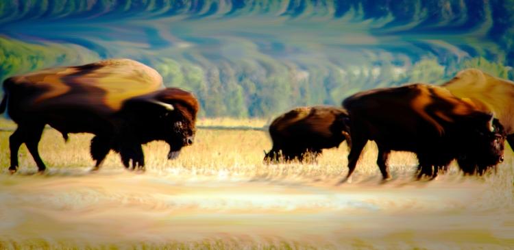 Buffalo Two Trip