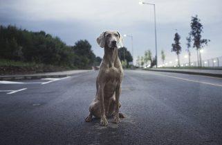Trees-Sky-Street-Animal-Dog-Breed-Clouds-Road-2600691-321x209